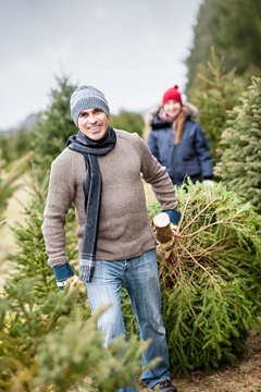 Christmas Tree Delivery Services in London