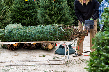 Trustworthy Christmas Tree Installations at Great Prices